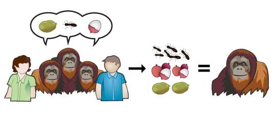 Monkeys4